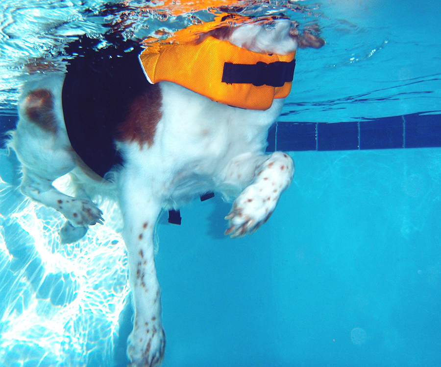 dog-hydrotherapy